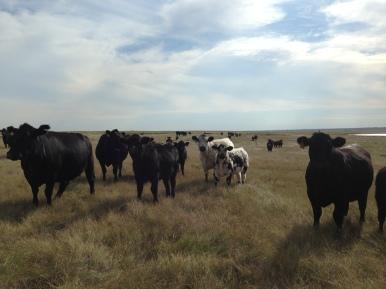 Pasture visit