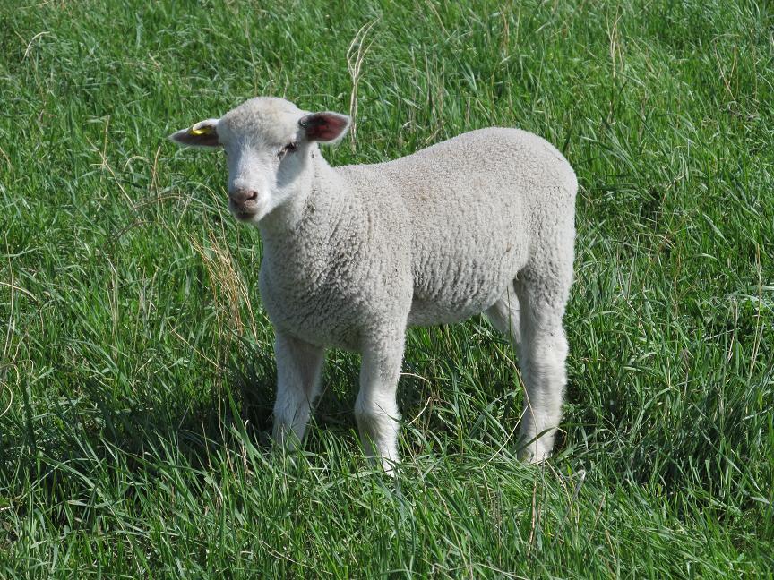 Pictures | Loch Lomond Livestock Ltd.